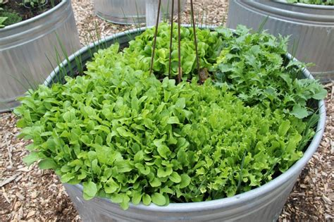 stock tank vegetable gardening 17 best images about stock tanks on gardens