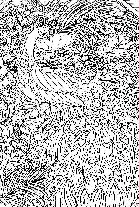 Peacock Coloring Pages For Adults Stunning Coloring Stunning Coloring Images