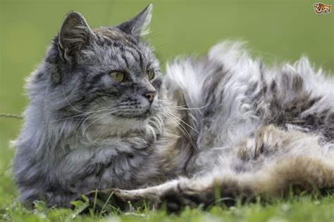 old cat disease five common diseases of elderly cats pets4homes