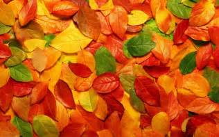 leaf colors autumn leaves background wallpaper 2560x1600 80615