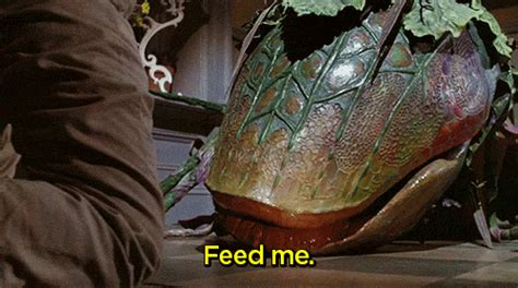 Feed Me Seymour Meme - 26 things you ll only understand if you love eating but