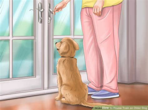 can you house train an older dog how to house train an older dog with pictures wikihow