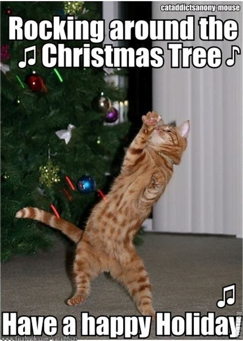 Cat Christmas Tree Meme - the eco cat lady speaks december 2012
