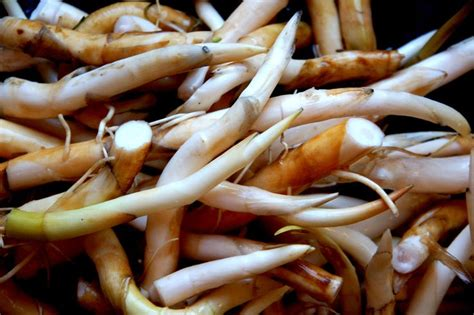 ediblr raw roots 17 best images about edible grasses and shoots on straws watches and the plant