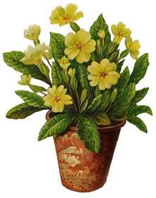 Flower Plant Pots Flower Pot Pictures Beautiful Flowers