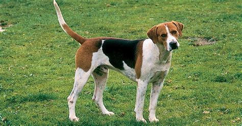 which breed are you can you name the breeds of quiz