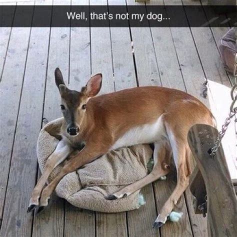 Deer Meme - bow hunting memes