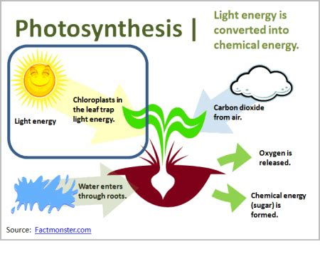 describe the relationship between chlorophyll and the color of plants the awesome process photosynthesis apbiowiki