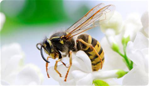pug bee sting ermahstomach acid pug milkbones treat gerd heartburn