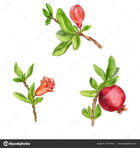 rami e fiori rami di albero di frutta con foglie fiori e melograno