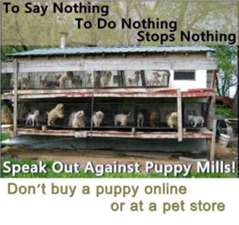 lancaster puppy mills animal welfare issues amish looking to build puppy mill in berks county pa