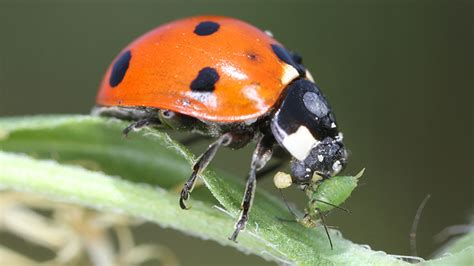 good  bad bugs    garden chicago tonight
