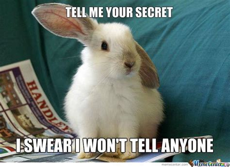 Silly Rabbit Meme - 20 very funny rabbit meme photos and pictures