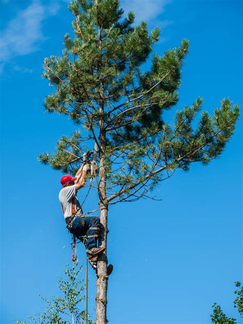 tree trimming 3 signs you need tree trimming tidwell s tree service