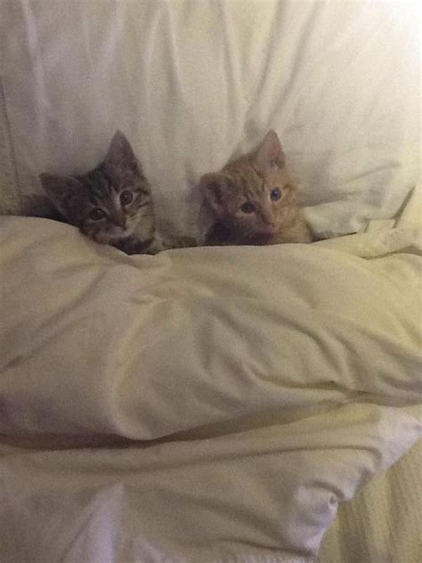 tucked in bed tucked in for bed funny pics pinterest