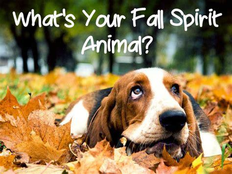 inner spirit animal what s your fall spirit animal playbuzz
