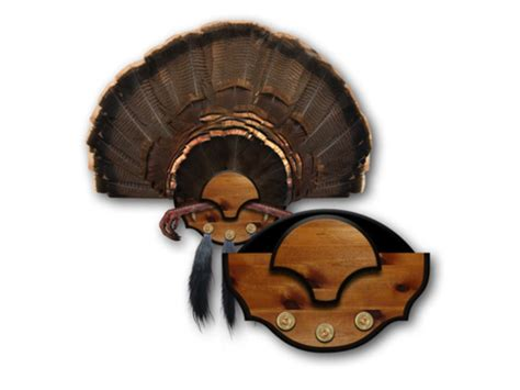 turkey fan and beard mounting kit mountain mike s beard master turkey fan mounting plaque