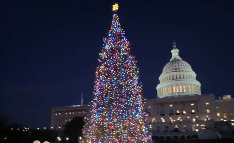 oh christmas tree in dc what s hot washington