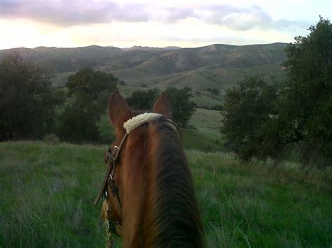 holistic horse training vital equine holistic veterinary