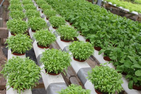 Di Grow hydroponic nutrients are highly used to grow various