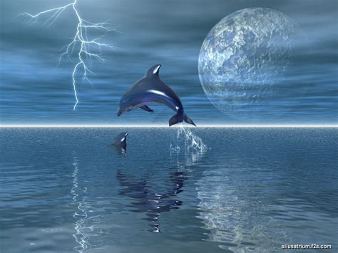 and dolphin dolphins and whales images dolphin hd wallpaper and background photos 38313