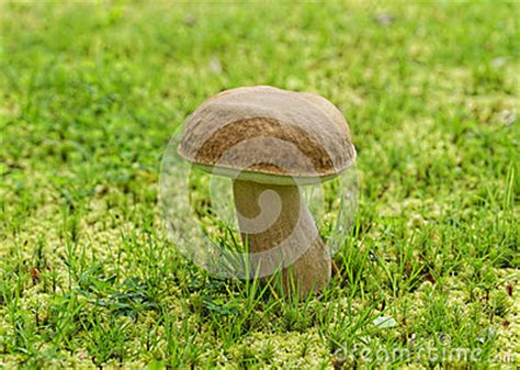 Pilze Botanischer Garten by Die Pilze Im Sch 246 Nen Botanischen Garten Furnas