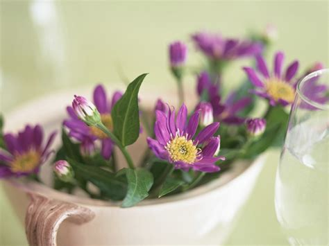 wallpaper flower in pot images of floral design purple flowers in white pot