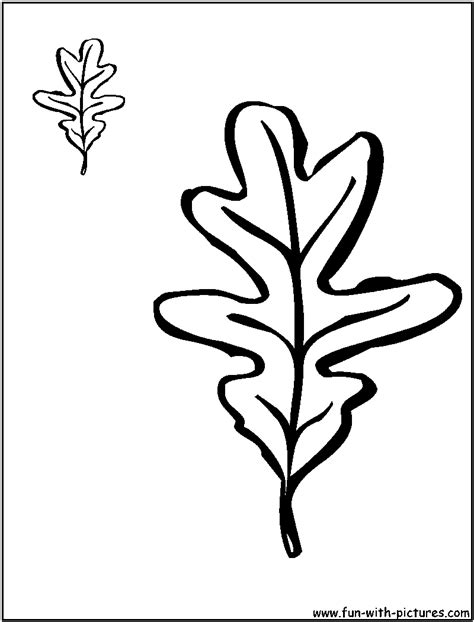 coloring pages oak leaf white oak leaves coloring page