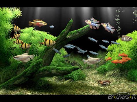 download wallpaper bergerak untuk pc windows xp download free dream aquarium screensaver dream aquarium