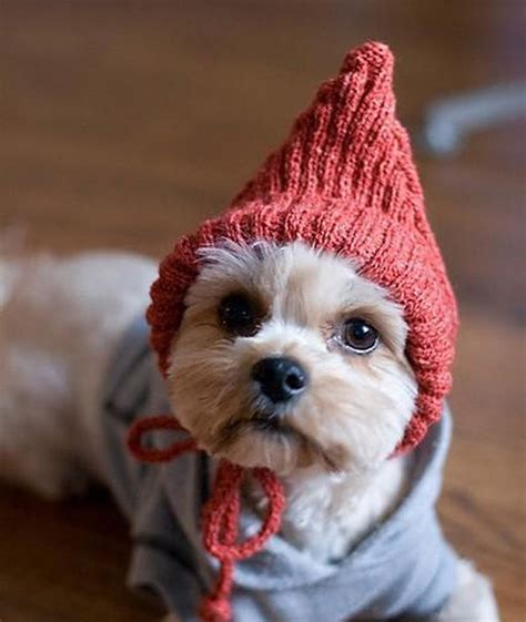 puppies in hats style save us dogs in hats 15 photos style save us