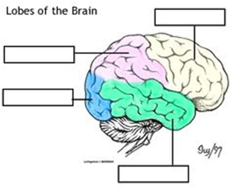 the human frontal lobes third edition functions and disorders science and practice of neuropsychology books 1000 images about psychology on language