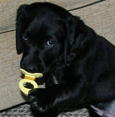 puppy pacifier 301 moved permanently