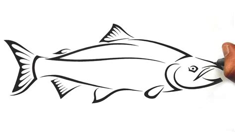 how to draw salmon fish