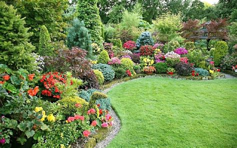 Permalink to gardeners world japanese maple – Japanese Maple   gardening forum   gardenersworld.com