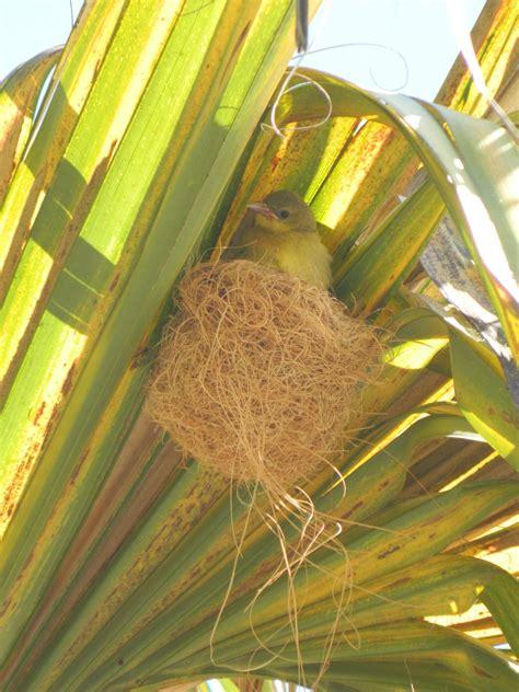 golden gate audubon societybirding hotspot u c botanical