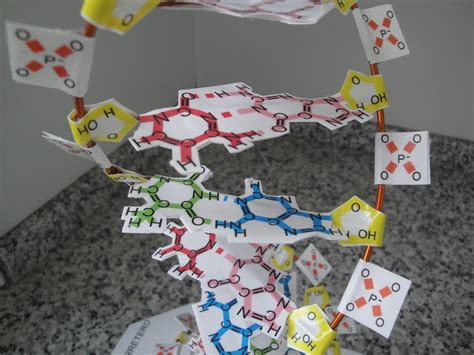 dna en maqueta maqueta de adn con papel youtube