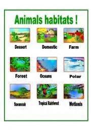habitat si鑒e social 1000 images about animals habitats on