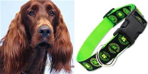 irish setter dog accessories the artful canine
