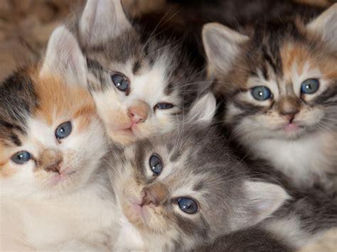 bis wann bekommt bafã g entwicklung eines katzenbabys 5 bis 8 woche