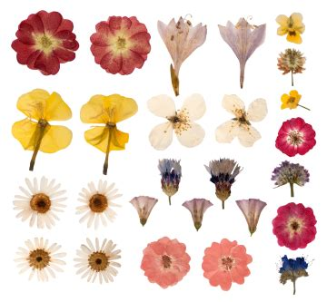 preserve flowers tips on drying flowers grower direct fresh cut flowers presents
