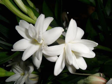 imagenes de flires blancas fondos de bellas flores blancas fondos de pantalla de