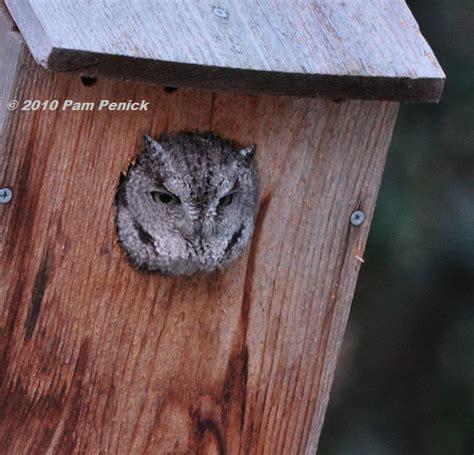 how to build or buy a barn owl nest box barn owl box