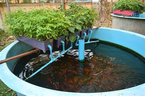 diy aquaponic plans    build treescom