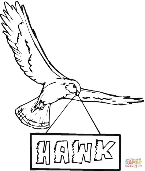 hawk coloring pages harris hawk free colouring pages