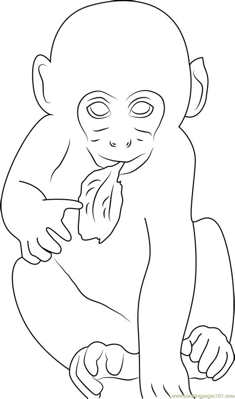 rhesus monkey coloring page baby monkey eating leaf coloring page free monkey