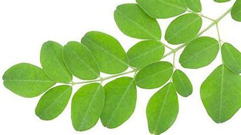 Harga Mustika Ratu Daun Kelor ekstrak daun kelor jadi produk makeup namanya