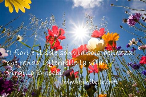 fiori frasi fiori e sole citazioni immagini