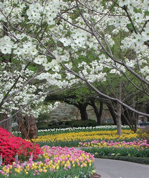 Dallas Flower Garden Dallas Botanical Gardens Tulips The Saturday Evening Post