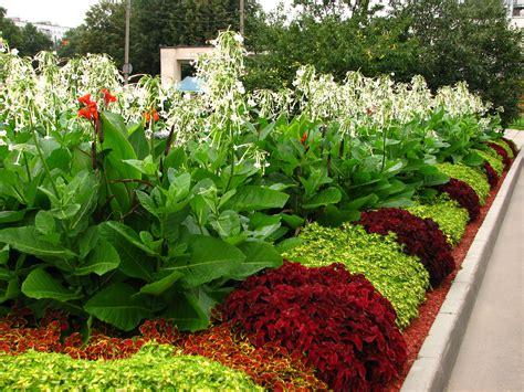 Flower Beds by File Flowerbeds In Kolomenskoye 02 Jpg