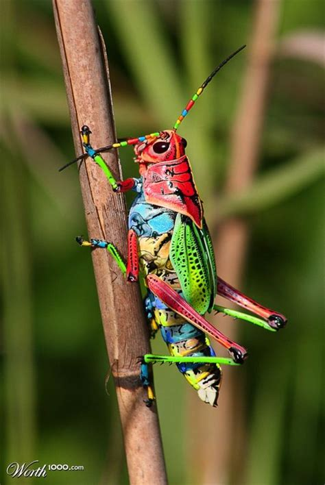 colorful grasshopper colorful grasshopper wouldn t these colors look in a